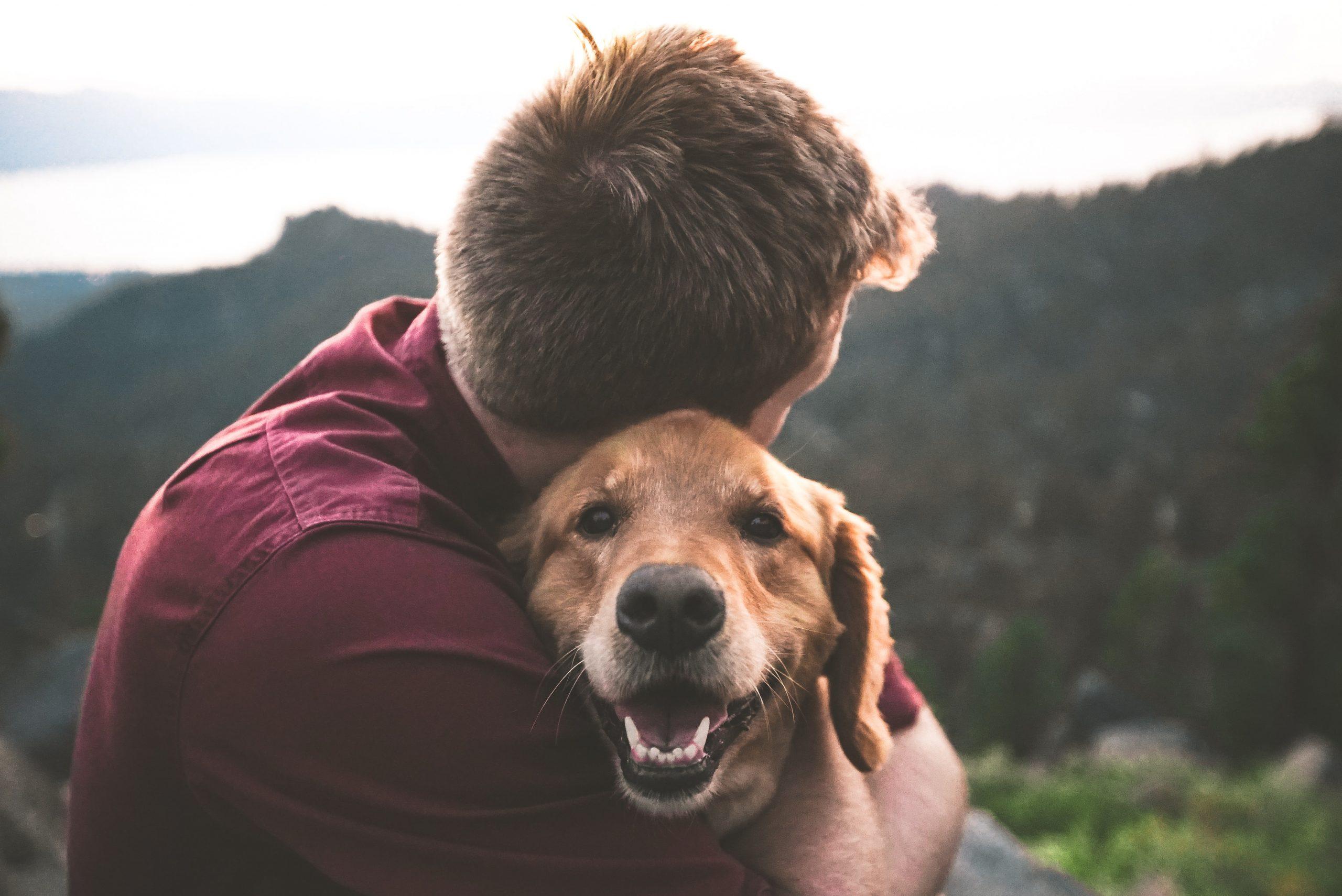 Chiny gite Embarcadere 56 vacances avec chien